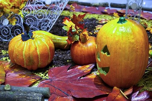 Halloween pumpkins and jack o'lanterns